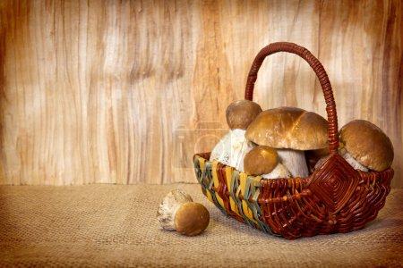 Photo pour Panier plein de champignons de pierre isolés sur fond bois. champignons de pierre fraîche  . - image libre de droit