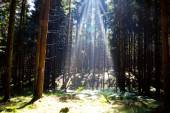 Sunlight in the summer forest.