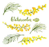 Vector watercolor botanical elements set Vector leaves and flowers Floral vector elements