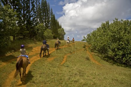 Photo for Horseback riders riding a trail - Royalty Free Image