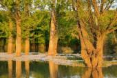 Sunset on Ogosta river, Bulgaria