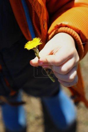 Photo pour Mère et belle-mère dans la main de mon fils. fleur jaune pour maman - image libre de droit