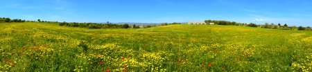 Flowery scenery