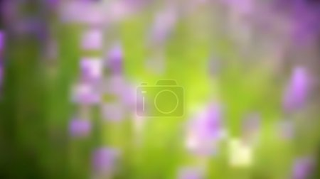 Illustration for Lavender field background. - Royalty Free Image