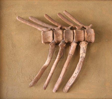 old fossil bones
