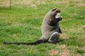 Opice na zelené trávě