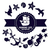 Ručně tažené dekorativních prvků na bílém pozadí. Mořské mušle, hvězdic, mořských řas, korálů a vlny