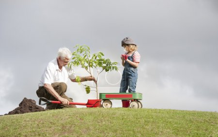 grandfather and granddaughter plant a tree