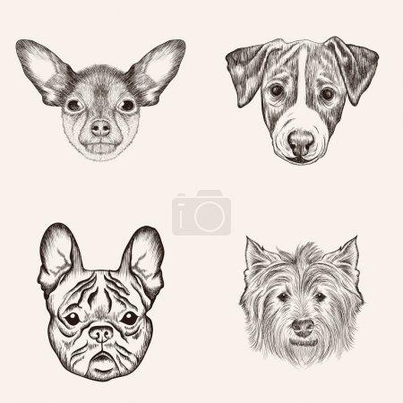 Sketch Bulldog Terriers. Hand drawn realistic faces of dogs vect