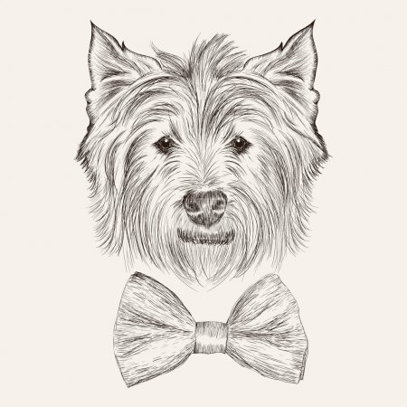 Vector sketch west highland terrier with bow tie. Hand drawn ill