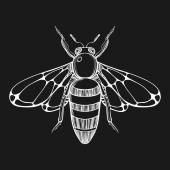 Hand drawn engraving Sketch of  Bee Vector illustration for tat