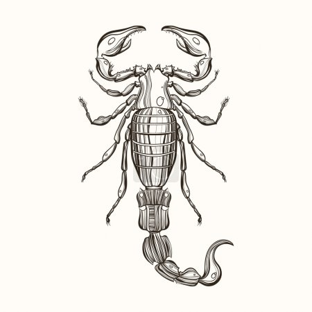 Illustration for Hand drawn engraving Sketch of Scorpion. Vector illustration for tattoo and handmade decorative brooch. - Royalty Free Image