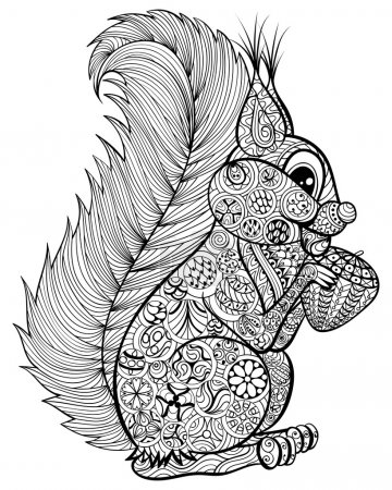 Hand drawn funny squirrel with nut  for adult anti stress Colori