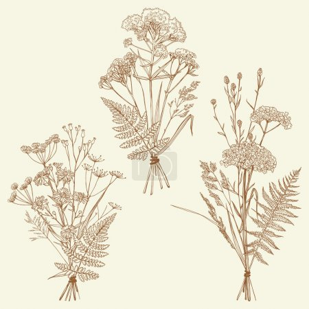 Illustration for Set of illustrations of plants. Herbarium. Bouquets. Sketch. Freehand drawing. - Royalty Free Image