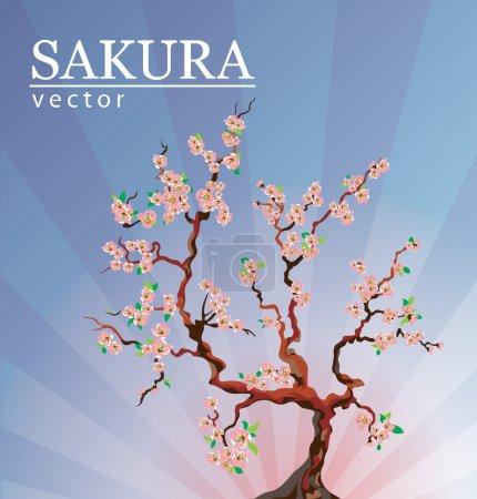 Sakura or cherry blossom