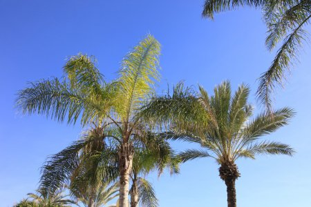 Palm trees and blue skies
