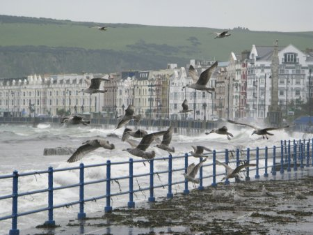 Seagulls and spray