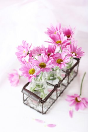Photo for Pink chrysanthemum flowers on white wooden background - Royalty Free Image
