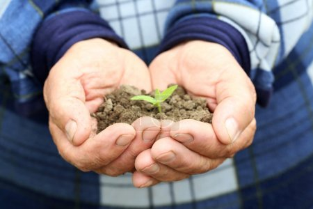 hands holding ground with plant