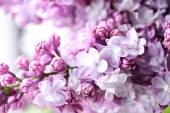"""Постер, картина, фотообои """"Фиолетовая сиреневые цветы"""""""