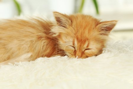 Photo pour Chaton rousse dormant sur plaid blanc gros plan - image libre de droit