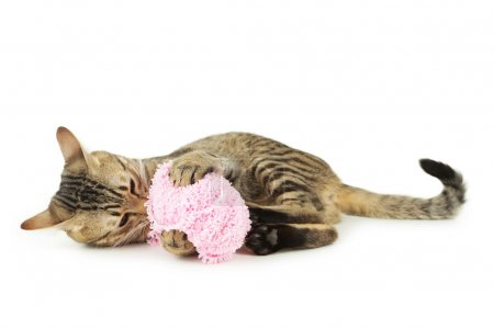 Beautiful cat with ball