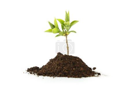 Foto de Joven planta verde en el suelo aislado en blanco - Imagen libre de derechos