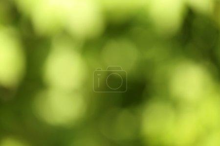 Photo pour Fond de bokeh vert nature - image libre de droit