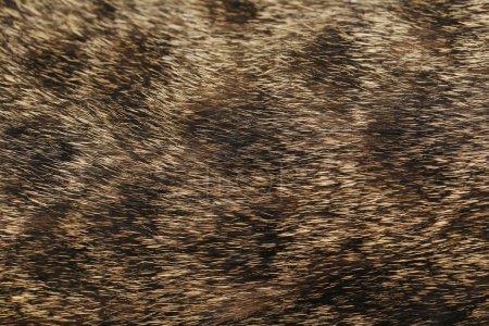 Skin of cat background