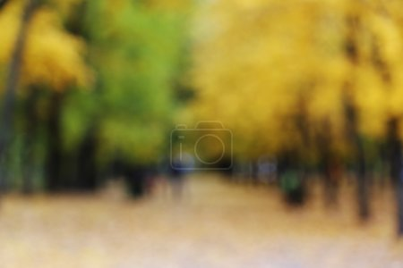 Bokeh in the autumn park
