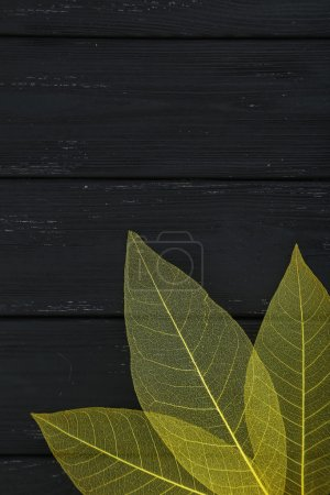 Photo for Yellow skeleton leaves on black wooden background - Royalty Free Image