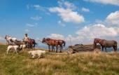 Putovní tábor Gypsy s koněm a vozem