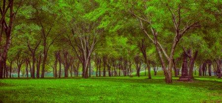 Photo pour Arbres verts dans le parc, temps d'été et pelouse verte - image libre de droit