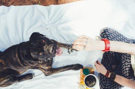 Girl on picnic feeding her big dog.