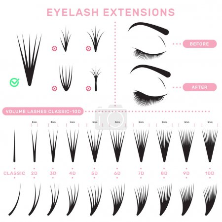 Illustration for Eyelash extension infographics. Volume boost guide, fake lashes application, eyelashes cluster set. Can be used for beauty care or salon concept - Royalty Free Image