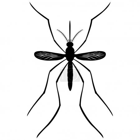 Nature, silhouette Mosquito stilt, top view. Ideal for informational and institutional related sanitation and care