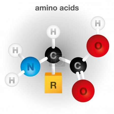 Illustration representing a composition and structure of the amino acid chemical element, ideal for educational books and institutional material