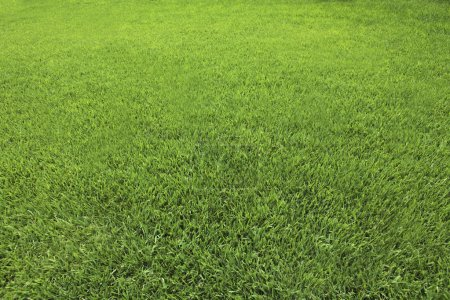 Background of Perfect Cut Green Grass
