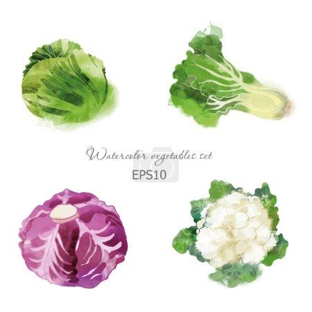 Illustration pour Ensemble de légumes vecteurs aquarelle avec chou, chou rouge, chou-fleur et laitue - image libre de droit