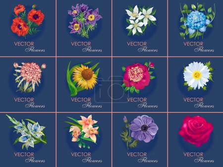 Illustration for Twelve variants of floral cards for your design decisions. Vector illustration. Poppy, sleep-grass, primrose, clematis, chrysanthemum, echinacea, peony, daisy, gladiolus, carnations, anemones, roses. - Royalty Free Image