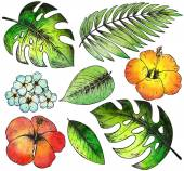 Set of colorful hand drawn tropical plants and flowers