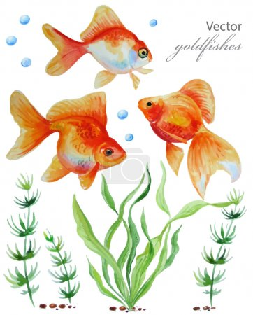 Watercolor vector collection of  hand drawn goldfishes