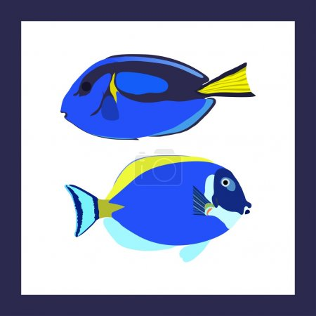 Two bright surgeonfishes in frame - vector illustr...