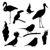 Set of birds: parrot bullfinch bird hoopoe toucan stork peacock flamingo - vector illustration