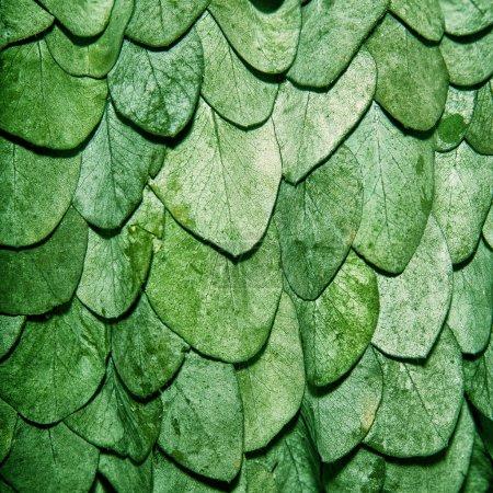 Foto de Las hojas verdes de fondo en forma de escamas de una serpiente - Imagen libre de derechos