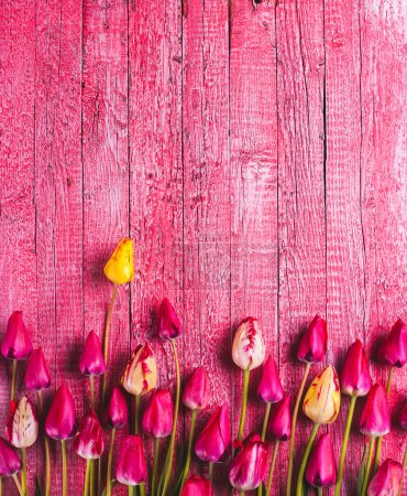 Photo for Various tulips on pink wooden background - Royalty Free Image