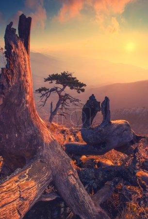 Pinetree Tarah-Haya