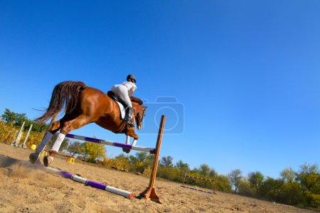 female jockey with purebred horse