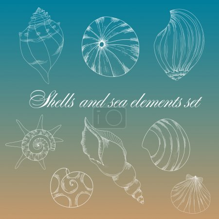 Photo for Vector shells and sea elements set. - Royalty Free Image