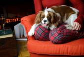 Lady relaxing with her dog (Cavalier King Charles spaniel